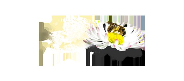 En pollinerande blomma
