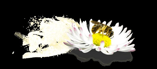 Pollenating flower